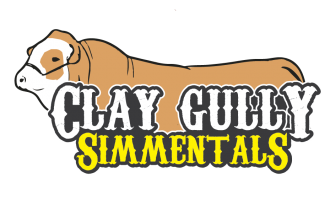 Clay Gully Simmentals