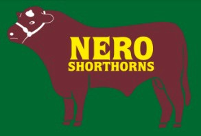 Nero Shorthorns