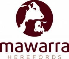 Mawarra Herefords 2018 Annual Bull Sale – March 26th