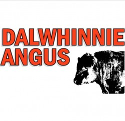 Dalwhinnie Angus will offer 4 Lots at the RAS Angus Sale at the Royal Sydney Show – March 25th