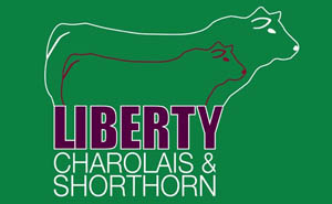 Liberty Charolais & Shorthorns 2019 Yearling Bull Sale – Apr 29th