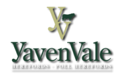 YavenVale Herefords 2019 Annual Bull Sale – Feb 20th