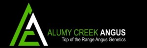 Alumy Creek Angus 2019 On Property Bull Sale – May 31st