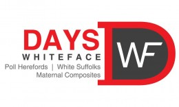 Days Whiteface 2019 Poll Hereford Bull Sale – Feb 18th
