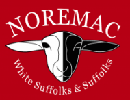 Noremac White Suffolks & Suffolks 2018 Ram Sale – October 22nd