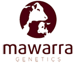 Mawarra Herefords 2019 Annual Bull Sale – March 25th