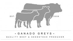 Ganado Murray Greys will offer 2 Bulls, 1 Female and 1 Semen Package at the 2019 Murray Grey National – Apr 29th